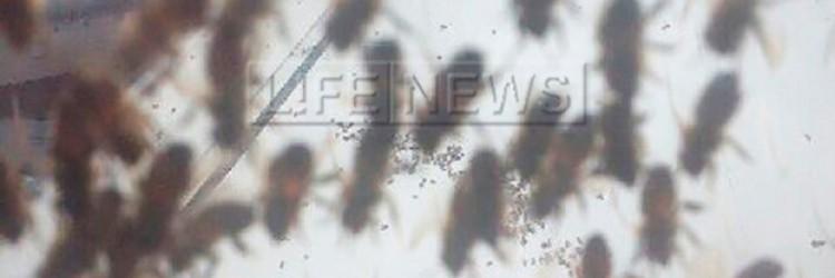 Пчёлы атаковали Airbus A319 во Внуково Пчёлы на окне иллминатора самолёта